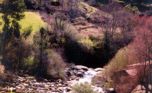 Categoria II - Água Doce - 1º Classificado - José Esteves Pereira