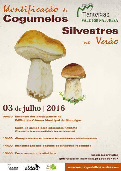 Identificação de Cogumelos Silvestres no Verão